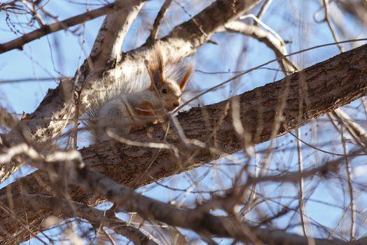 Beautiful, furry squirrel