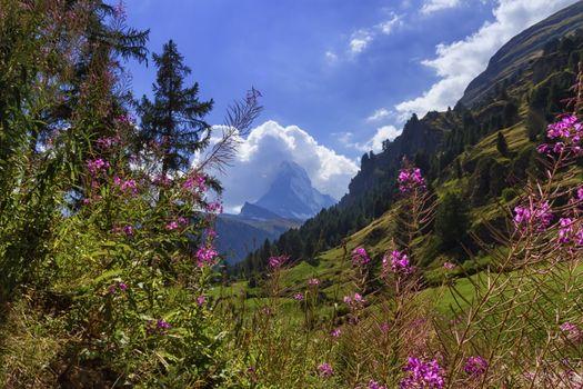 Matterhorn from the flowery valley by day, Zermatt, Switzerland