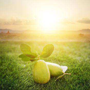 Chemical free organic grow lemon