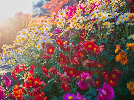 flowers at the garden of morning calm