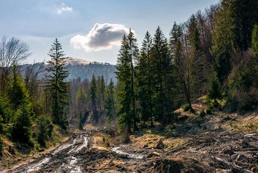 dirt road through brutal deforestation area