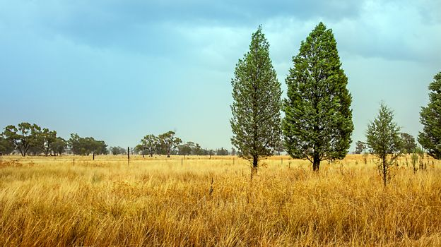 Outback at Dubbo New South Wales Australia