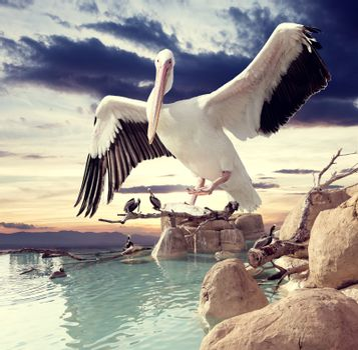 Surreal landscape and birds