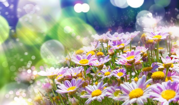 Spring flowering meadows and sunbeam background