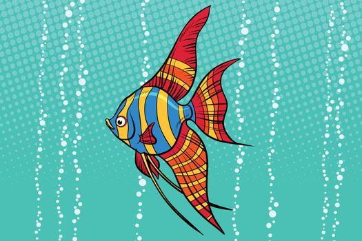 Freshwater angelfish aquarium fish