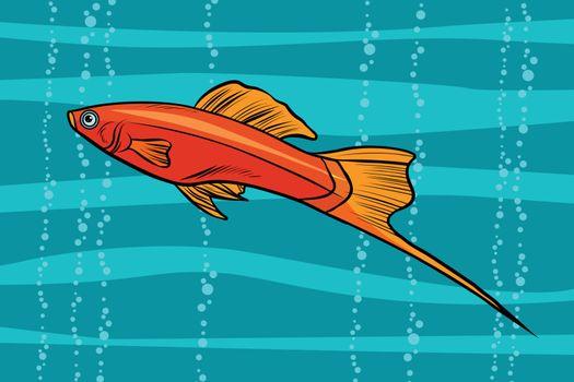 swordtail aquarium fish