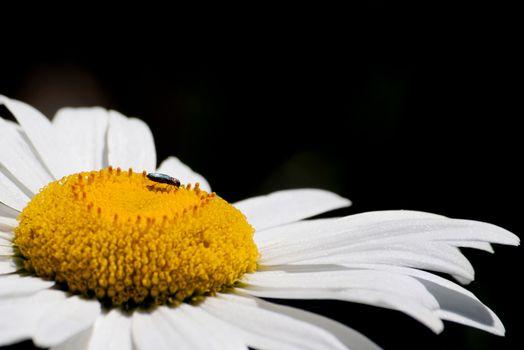 Macro shot flower background