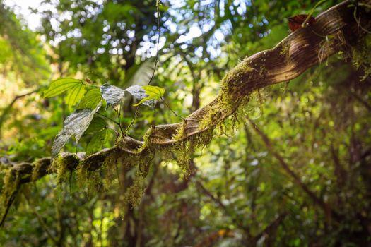 Jungle in Costa Rica
