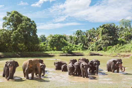 Elephant family at Maha Oya - Sri Lanka