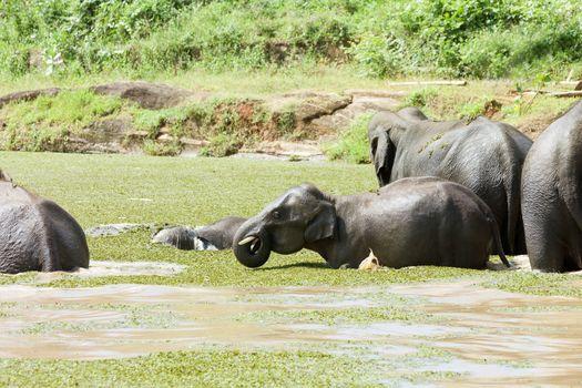 Cooling at Maha Oya - Sri Lanka