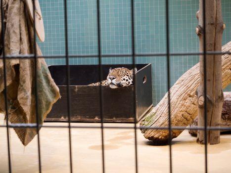 Rare species of animals in Zoological garden, Berlin