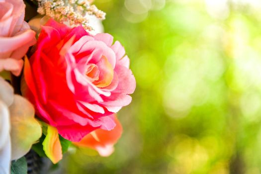 Red rose on green bokeh background.