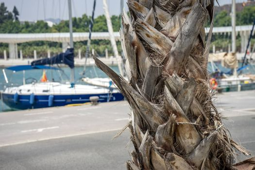 Bark of a palm tree with a boat in the background in Malaga, Spain, Europe on a bright summer day