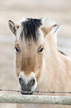 Horse Mare Close Up