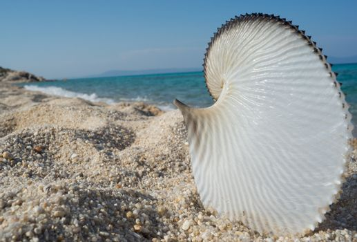 Big and beautiful seashell on an empty isolated beach.