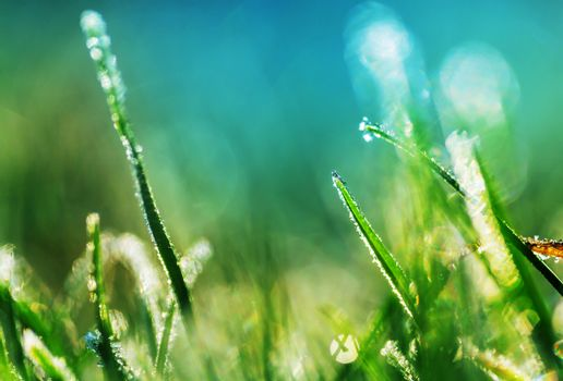 Frozen grass