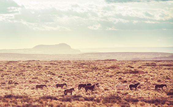 Horse in prairie