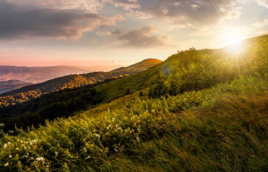 grassy meadow on a hillside at gorgeous reddish sunset