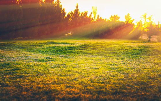 Warm spring day, landscape of a green grass field in bright yellow sun light, beautiful nature, beauty of springtime season