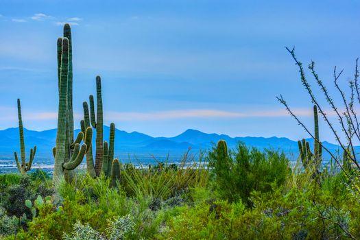 Saguaro NP, AZ