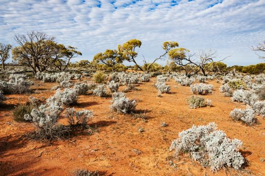 the red center in the australian desert, the outback in Northern Territory