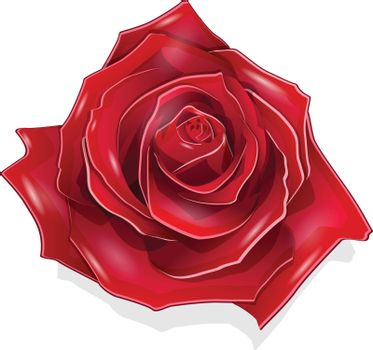 Stock Illustration Scarlet Rose on the White Background