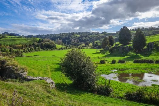 New Zealand countryside fairy landscape in Waitomo