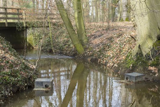 Floating muskrat trap in a natural stream in a forest in the hamlet called the Achterhoek in the Netherlands preventing the explosive growth of these beasts.