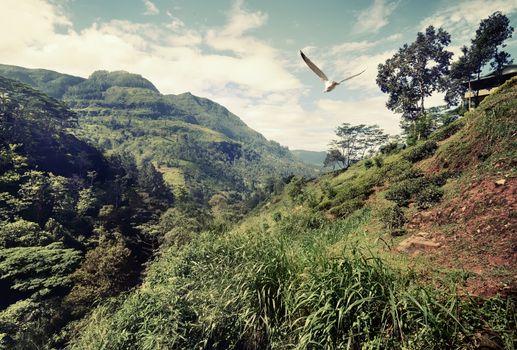 Bird over mountains
