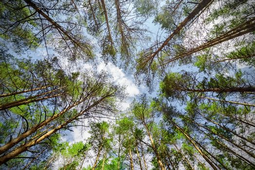 Trees and sky from below