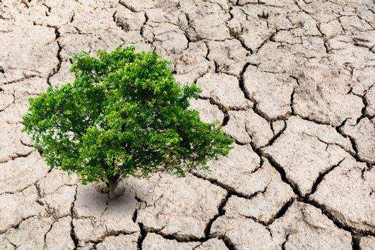 A tree on desolate land. Tree on dry earth, ecology disaster.