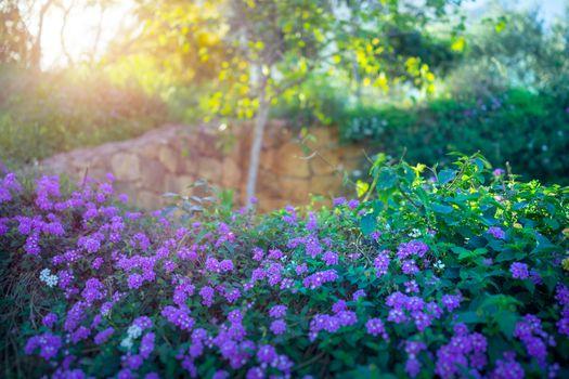Beautiful blooming orchard