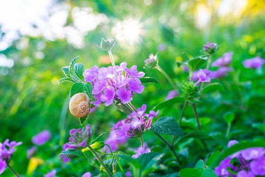 Wild flowers field