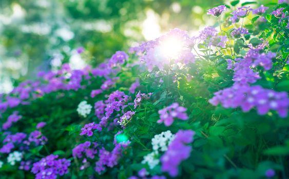 Beautiful floral bush