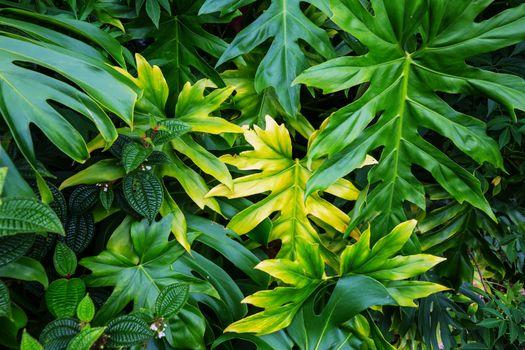 Hawaiian garden