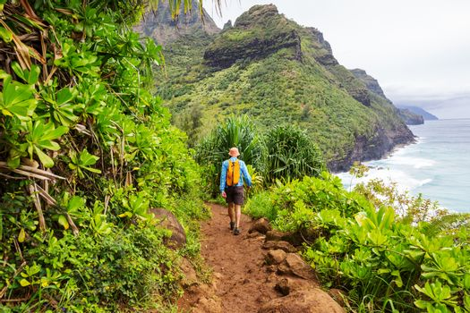 Hiker on the trail in green jungle, Hawaii, USA