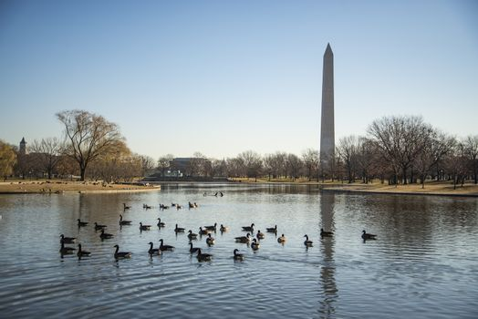 A photograph of the Washington Monument in Washington DC. It was taken on a cold but sunny day in Autumn Fall .