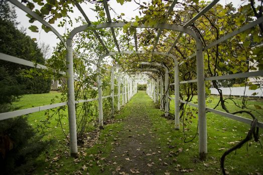 Green tunnel in fall foliage. Way to nature. Natural background from beautiful garden, vintage style. In New England USA