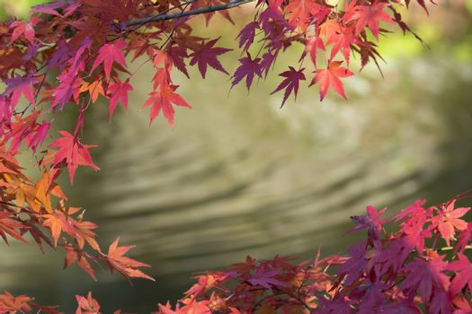 Autumn leaves with water background