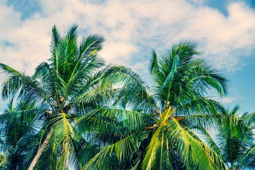 Beautiful fresh green palm trees