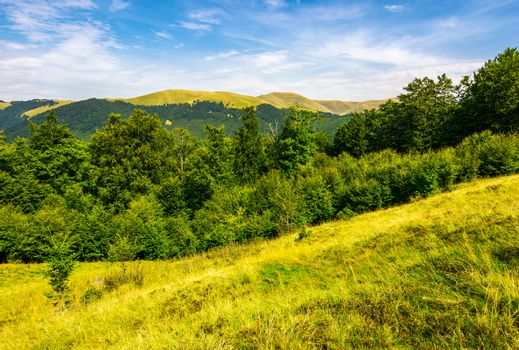 forested hills and meadows of Svydovets ridge
