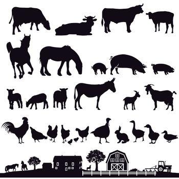 Farm animals and farm, illustration.