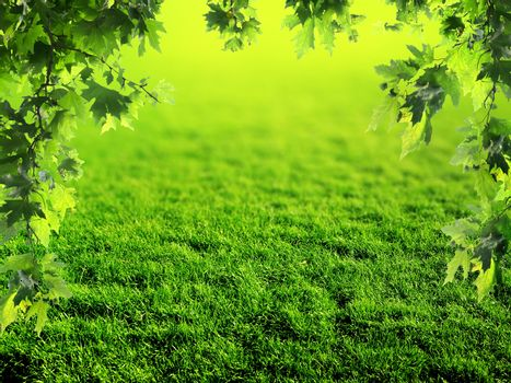 Lawn in the spring