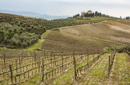 countryside and wineyard in Chianti, Tuscany, Italy