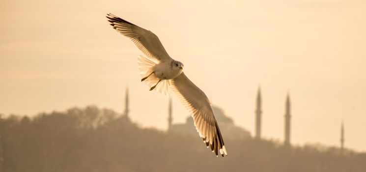 Seagulls flying in sky  in Istanbul of Turkey