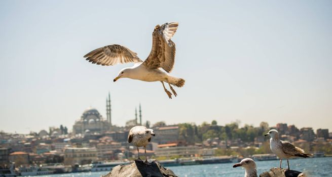 Seagull flying in a sky with a mosque at the background