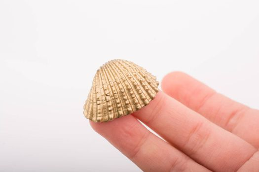 Little gold colored seashell in hand on white background