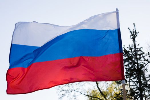 Russian flag flying in the wind on the forest background