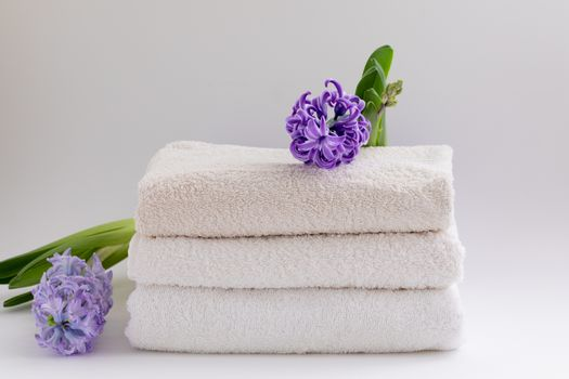 White and beige towels with a fresh hyacinth isolated