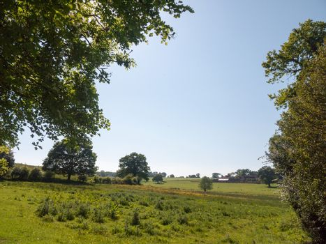open farm field green grass lush pasture landscape background; essex; england; uk